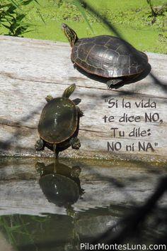 """Si la vida te dice NO, Tu dile: NO ni NA"""