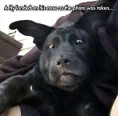 A fly landed on his nose as the photo was taken. . . .