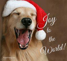 Joy to the world! @myaugiedoggy