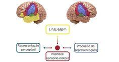 Falar exige ações nos dois lados do cérebro, mostra estudo