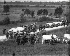 Oxen Oxen transporting French heavy artillery during WW1. Oxen were useful in pulling the heaviest equipment.