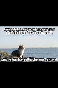 Cats are misunderstood