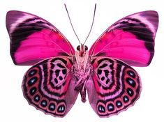 like using these butterflies for gift pack, bags & tags ..........Fantasy Pink. Cool Looking Colors Dude...