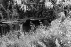 bwstock.photography  //  #abandoned #grass Black White Photos, Black And White, Free Black, Documentary, Abandoned, Grass, Plants, Photography, Outdoor