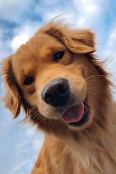cut puppy pic Cute dogs and puppies Cute Baby Dogs, Super Cute Puppies, Cute Dogs And Puppies, Doggies, Dogs Golden Retriever, Retriever Puppy, Baby Golden Retrievers, Cute Little Animals, Cute Funny Animals
