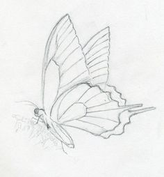 2603cfec6c8 How to make a quick butterfly sketch with pencil