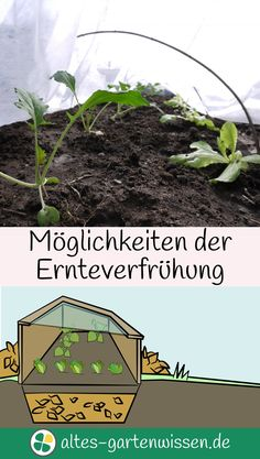 Möglichkeiten der Ernteverfrühung   altes-gartenwissen.de #Garten #Nutzgarten #Frühbeet #Gewächshaus #Folientunnel #Laubbeet #Mistbeet