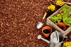 There different types of mulch to help help your garden and lawn. how to pick the best mulch for your garden. Garden Types, Best Mulch For Garden, Garden Mulch, Mulch Landscaping, Lawn And Garden, Landscaping Ideas, Diy Garden, Summer Garden, Organic Gardening