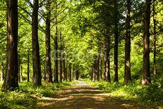 Muurstickers Bossen Lighting Tree Trail