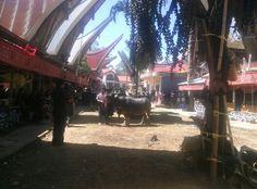 Rambusolo, Tana Toraja
