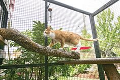 The Cat's Meow: Catios Provide the Perfect Spot for a Fix of the Great Outdoors : The Humane Society of the United States