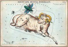 Card 16 Aries and Musca Borealis - Urania's Mirror