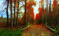 AUTUMN PATH - Forests Wallpaper ID 1168611 - Desktop Nexus Nature