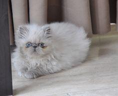 Sia 2,5 maand oud