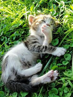 Yawning In The Grass #cute #cat