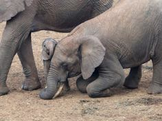 Big sister bends down to welcome newborn sister. Elephants are the purest.
