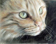 """The Cat Little Ginger"" par Paul Knight"