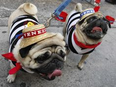 """Take a peek at some """"a-dog-able"""" Halloween costumes for dogs and cats."""