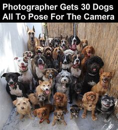Photos of shelter pets are vital...volunteer your time & talent if you are a photographer..please & thank you...-the little animals