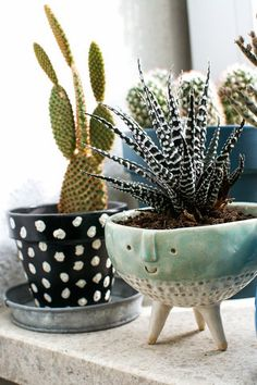 Room decoration using cactus is never ending. Starting from the real cactus, cactus displays, to the cactus made of stone. Methods, planting media, and pots used to plant cactus and important infor… Cacti And Succulents, Potted Plants, Garden Plants, Indoor Plants, Indoor Cactus, Garden Web, Balcony Garden, Succulent Pots, Succulent Containers