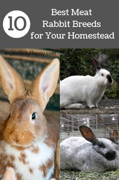The best meat rabbit breeds for homestead livestock. The best meat rabbit breeds for homestead livestock. Meat Rabbits Breeds, Raising Rabbits For Meat, Rabbit Breeds, Rabbit Farm, Rabbit Life, Rabbit Cages, Indoor Rabbit, Future Farms, Best Meat