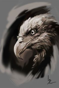 Eagle, Dmitriy Iorgachov on ArtStation at https://www.artstation.com/artwork/EwbKA