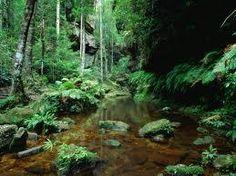 Australian Made Rainforest Fragrant Oil 15mls
