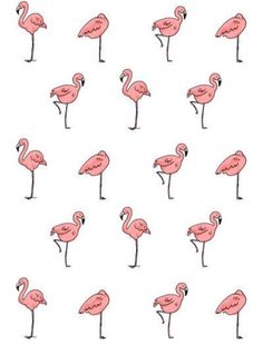 Pink flamingos always fascinated me