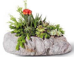 Plant the Future - Featherock Arrangement