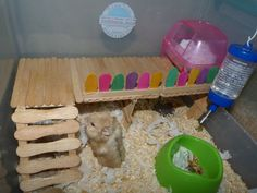 Popsicle stick levels in hamster cage, such a great idea. My roborovski would love this x