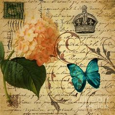 girly Hydrangea butterfly vintage paris scripts Greeting Card by Cranberry Sky