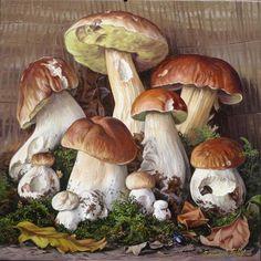 Illustration Botanique, Botanical Illustration, Painting & Drawing, Watercolor Paintings, Mushroom Plant, Art Et Nature, Mushroom Drawing, Vegetable Illustration, Decoupage