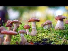 The Magic of Mushrooms bbc Documentary 2016