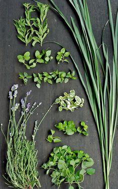 Fresh Herbs by mitayuu - mita yuu