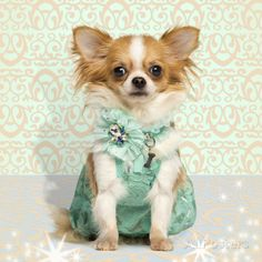 Chihuahua Wearing A Green Dress, Sitting On Fancy Background Poster van Life on White - bij AllPosters.be