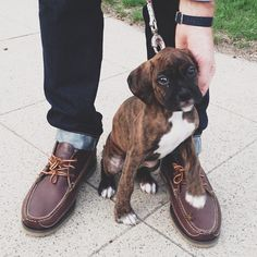 You can't go wrong with a nice pair of shoes and a puppy.
