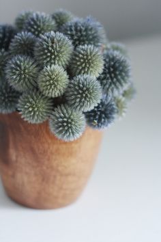 daee73fad013e Dried thistle! Advice  I like flowers that can be hung rather than dried in