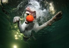 Seth Casteel's surreal photos of dogs underwater - The Washington Post