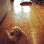 Near... Far... • Waldo... Bailey...