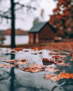 Image about nature in Visual Street Colors by mattamanga Autumn Rain, Autumn Cozy, Autumn Leaves, Cozy Rainy Day, Rainy Days, Autumn Aesthetic, Autumn Photography, Fall Pictures, Autumn Garden