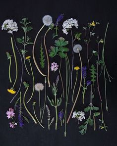 <p>The photography of Ja Soon Kim is beautifully arranged and structured. Focusing on wild flora and fruit, the artist gathers dried leaves and flowers on one surface to capture the composition from a