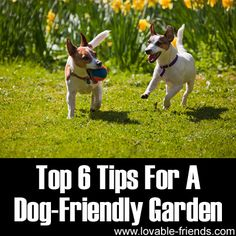 top 6 tips for a dog friendly garden direct link: http://petsblogs.com/2011/07/a-dog-friendly-garden/