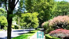 Tree-lined sidewalk in Eastmoreland Neighborhood, Portland, Oregon. Photographed by @KandyPhoto