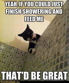 i imagine this is what its like having a cat....or a dog that acts like a cat -_-