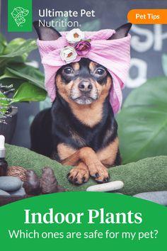 Funny Animal Videos, Cute Funny Animals, Cute Baby Animals, Animals And Pets, Teacup Puppies, Cute Puppies, Dogs And Puppies, Cute Dogs Breeds, Pet Care