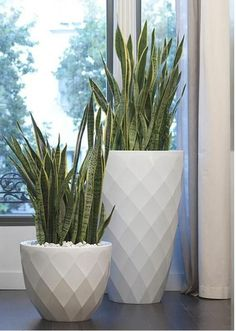 New easy patio plants flower pots ideas House Plants Decor, Patio Plants, Plant Decor, Potted Plants, Large Outdoor Planters, Outdoor Pots, Modern Planters, Outdoor Lounge, Decoration Plante