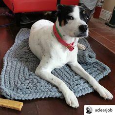 I Love My Blanket Knitting (@iloveblanket) • Instagram photos and videos Boston Terrier, Blanket, Photo And Video, Knitting, Dogs, Animals, Videos, Photos, Instagram