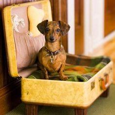 Ano novo cama nova! Seu melhor amigo também merece um lugarzinho confortável! Que tal transformar as malas que não tem mais função em um cantindo para seu pet? #santaajuda #GNT #micaelagoes #reciclagem #pet #cama