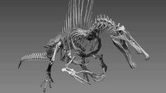 spinosaurus-skeleton-2.jpg (644×364)