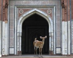 Photo Love {Inspiration}: Animal treatment via India Song by Karen Knorr Bambi, Color Photography, Animal Photography, Heart Photography, Animal Treatment, Animal Attack, Art Corner, New Artists, Artsy